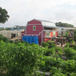 Red barn with rain barrels at the vegetable garden of AgriLife
