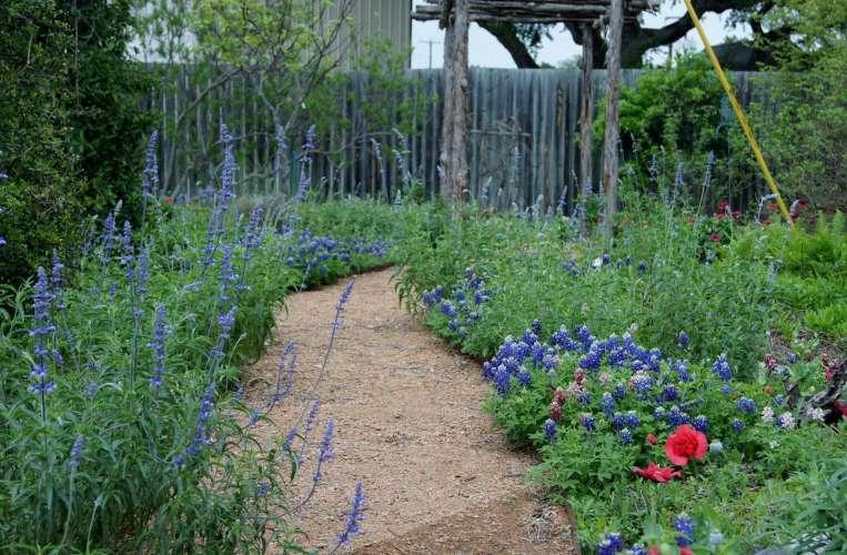 Photo of pebble path through the Wildscape area of the AEGC office garden