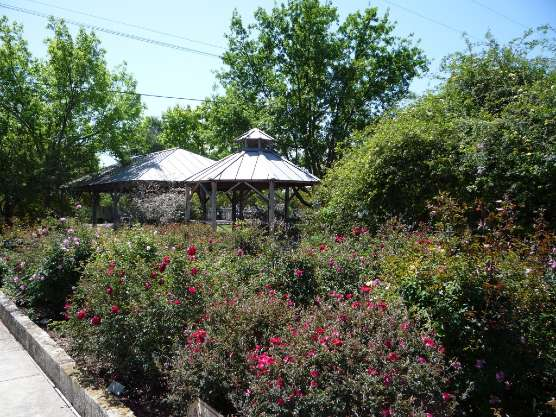 photo of Conservation Plaza Rose Garden with gazebo and pavilion in background